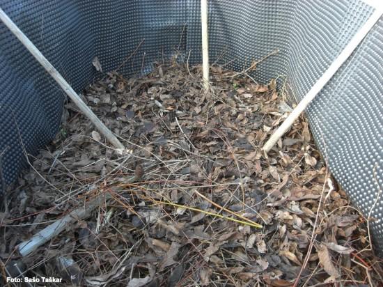 Listje in veje za prvo plastListje in veje za prvo plast
