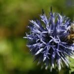 Leteče žuželke v vrtu