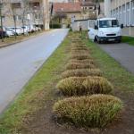 Nastopil je pravi čas za obrezovanje okrasnih trav